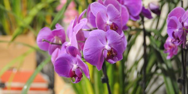 Pordenone Orchidea 2019: tutti gli eventi e le iniziative della 20° edizione!
