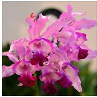 pordenoneorchidea-2015