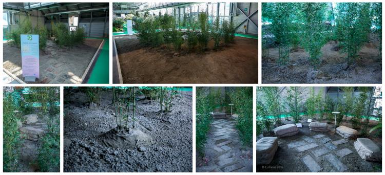 resizedimage750342-collage-giardino5