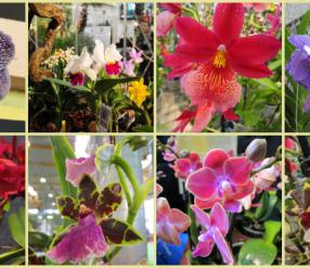 Pordenone Orchidea 2018