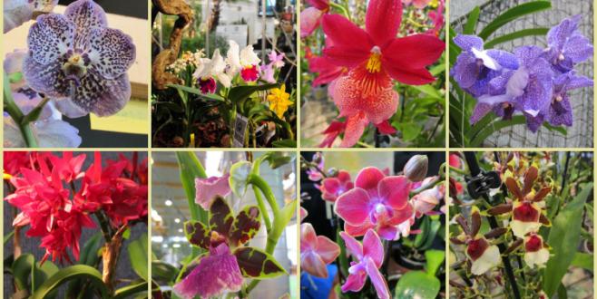 Pordenone Orchidea 2017