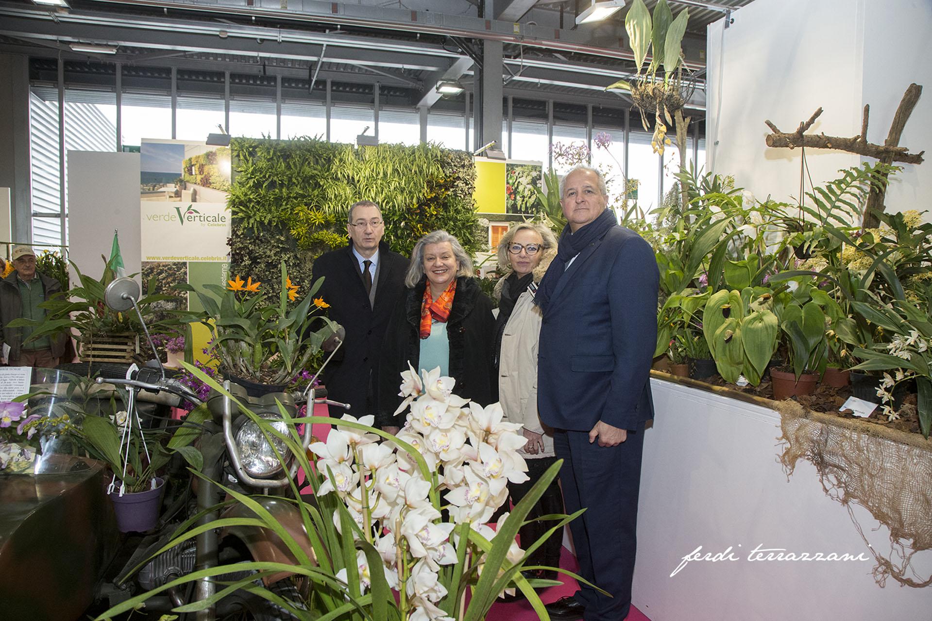 pn-orchidea-6641